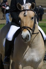 Prisco at Dressage at Eastwood