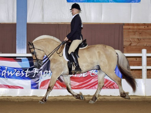 Anna Lee showing Jaeger under saddle