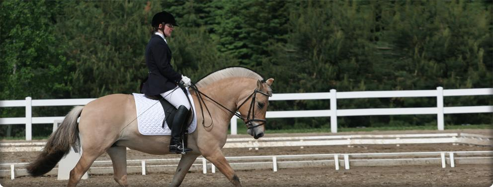 fjord horse at a dressage show