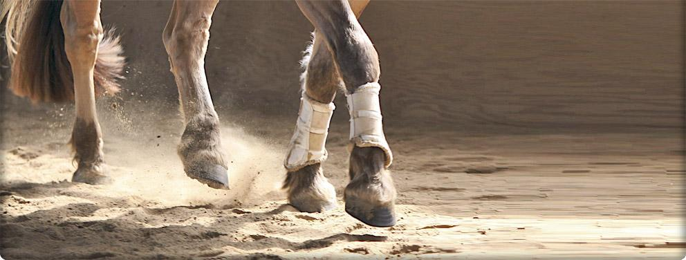 fjord horse artistic image of feet trotting