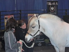Animal communicator Lauren Bode talking to Bocina