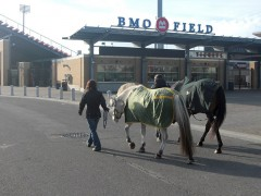 Walking past BMO field with new-found Thoroughbred friend Simon