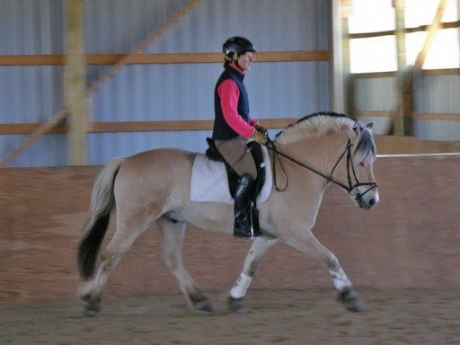 Lori training Cathy's gelding Einar