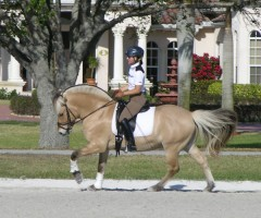 Stallion Mogly (Mosby X St.Pr.St. Inka / Illiano) ridden by Lori in Wellington, FL