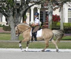 Stallion Mogly (Mosby X St.Pr.St. Inka / Illiano) ridden by Lori in Wellington, FL
