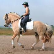 Horses We've Sold
