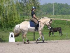 Bocina being ridden by Lori