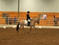 Kestrel in dressage
