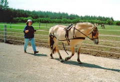 Ground driving introduces the horse to the harness.