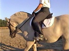 Riding training follows classical dressage principles.