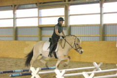 Fjord horse in cavalletti. Note flexion of knees and hocks in this and following photo.