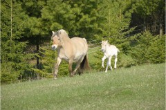 Mare and Foal: Raldiene and Bluebird Lane Ibis
