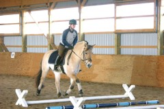Fjord horse starting out with cavalletti on lowest setting.