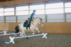 Fjord horse goes through three cavalletti on the top height, set one canter stride apart from each other.