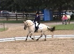 Valebu cantering in the show ring