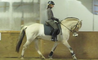 Fjord gelding for sale in trot to the right