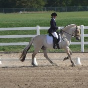 Counter canter