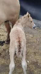 foal4