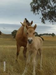 foal8