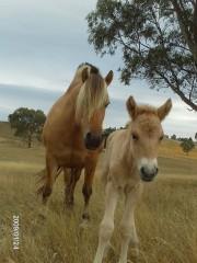 foal9