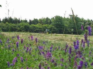 View of hay through vetch.