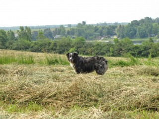 Iris in the hay.